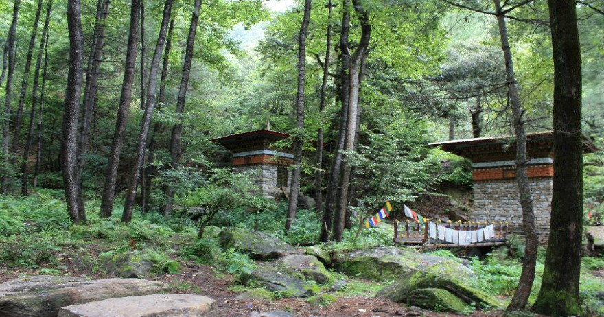 Forest bathing experience in Bhutan