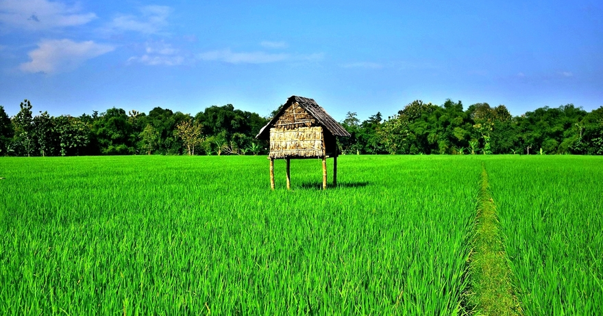 6. Walk through the emerald paddy-fields and countryside