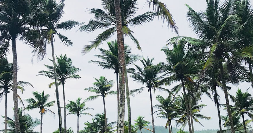 The Tropical Essence in Asia