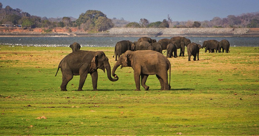 Luxury wellness journey with culture & beach-Voyage to the land of wild elephants